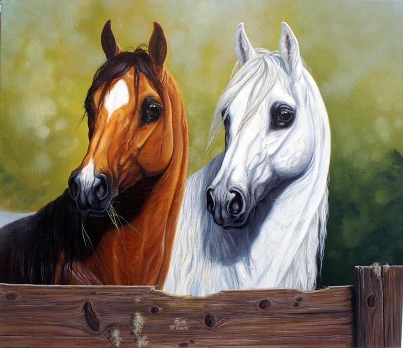 بالصور حصان عربي , الخيل العربيه الاصيله 6696 6