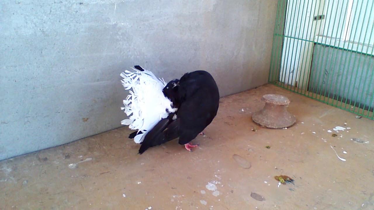 صور حمام هزاز , معلومات عن الحمام الهزاز