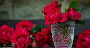 بالصور صور ورد رومانسيه , اجمل ورد رومانسيه معبره 5426 11 310x165