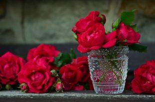صورة صور ورد رومانسيه , اجمل ورد رومانسيه معبره