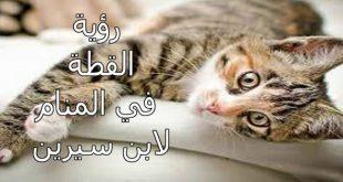 رؤية القطط بالمنام , تفسير ابن سيرين
