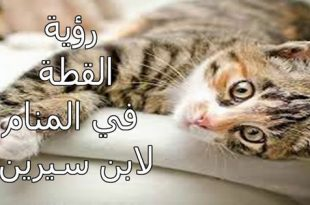 صورة رؤية القطط بالمنام , تفسير ابن سيرين
