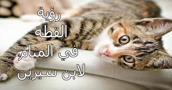 صور رؤية القطط بالمنام , تفسير ابن سيرين