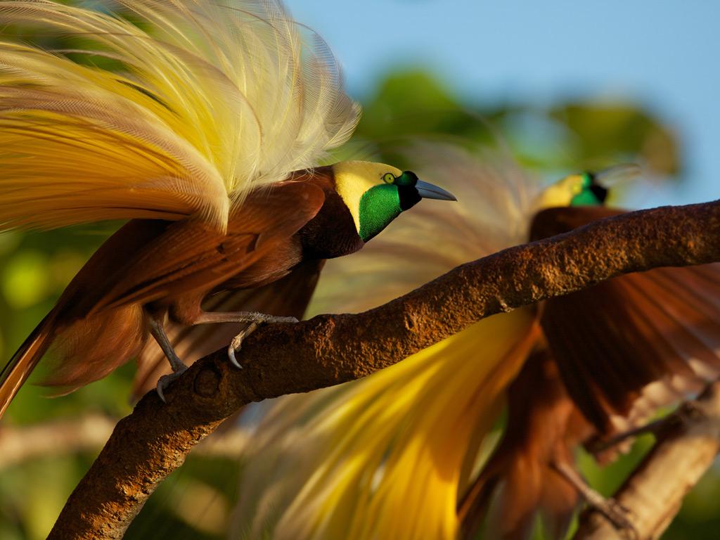 صور اجمل طيور العالم , عشره طيور الاجمل في العالم
