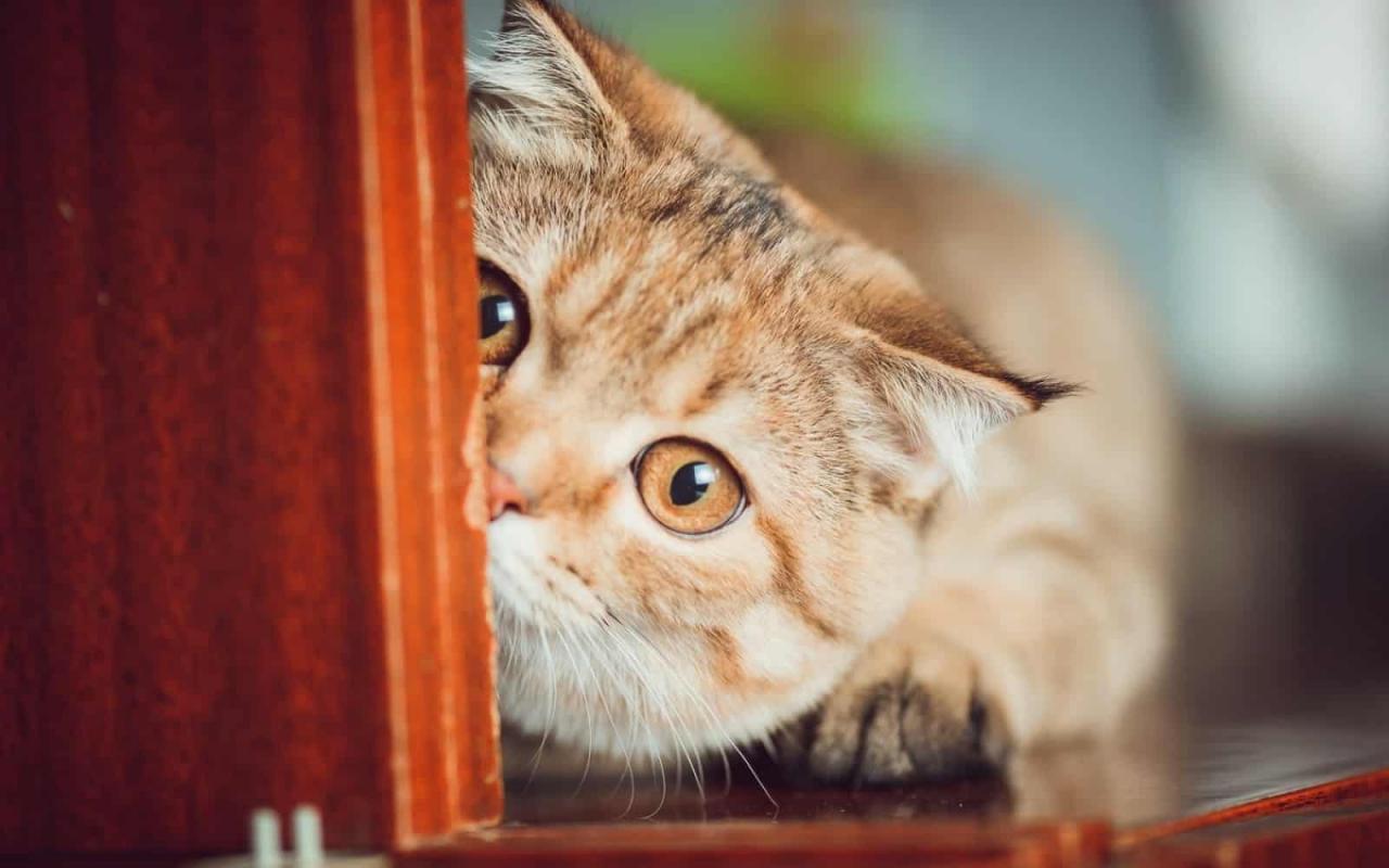 صورة قطط كثيرة في المنام , تفسير رؤية قطط كثيرة في الحلم