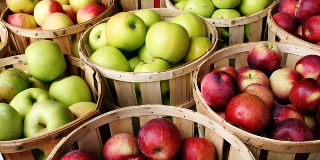 صورة ما فوائد التفاح , فوائد التفاح الصحية