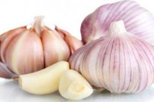 صورة ماهي فوائد الثوم , مزايا الثوم على للصحة