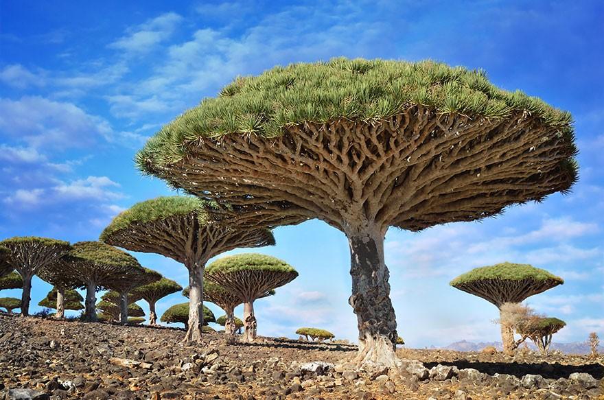صورة صور عن الاشجار , اشكال مختلفه للاشجار