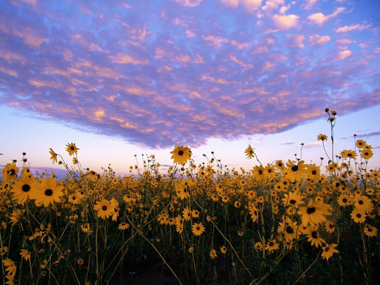 صورة صور ازهار طبيعية , اجمل و احلي صور ازهار طبيعيه