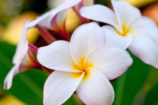 صور صور ازهار طبيعية , اجمل و احلي صور ازهار طبيعيه