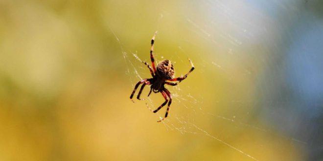 صورة تفسير حلم ازالة خيوط العنكبوت من البيت , رؤية حلم ازاله خيوط العنكبوت