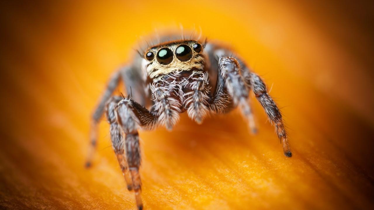 تفسيرحلم رؤية العنكبوت