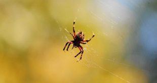 صور العنكبوت في الحلم , تفسير حلم العنكبوت في المنام