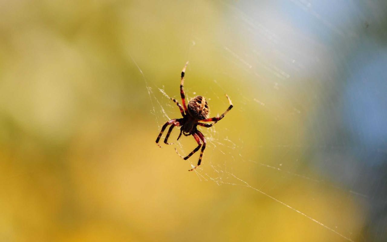 صورة العنكبوت في الحلم , تفسير حلم العنكبوت في المنام