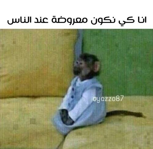 صورة صور مضحكة جزائرية , اكثر الصور المضحكة الجزائرية