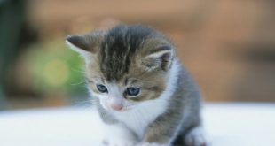 صورة صور قطط صغيرة , صور قطط صغيرة كيوت