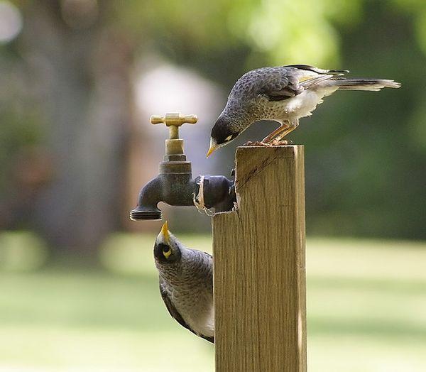 صورة صور طيور , اجمل اشكال و الوان الطيور