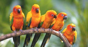 صور صور طيور , اجمل اشكال و الوان الطيور