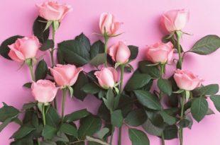 صورة تنزيل صور ورد , اجمل الورود الطبيعية للتحميل