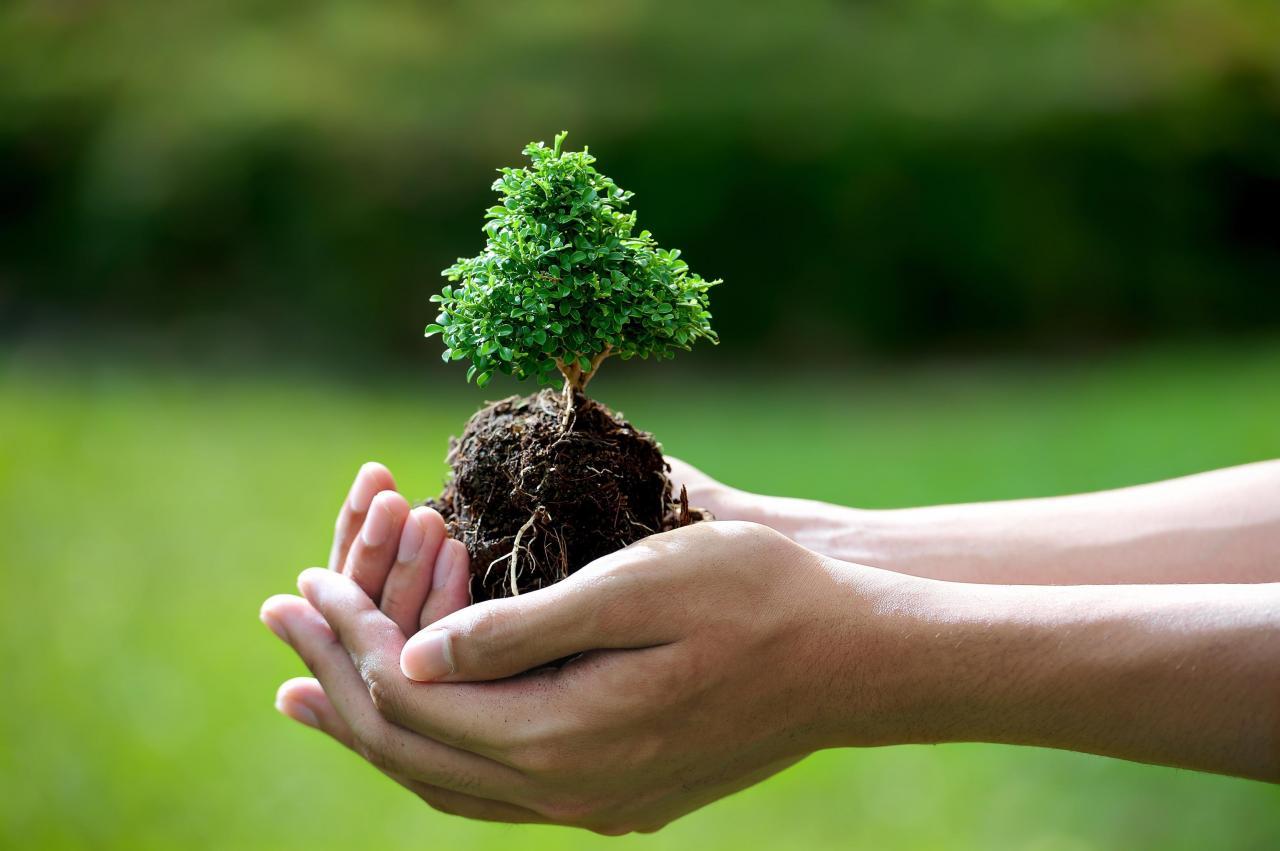 صور صور عن البيئة , احترام البيئه واجب