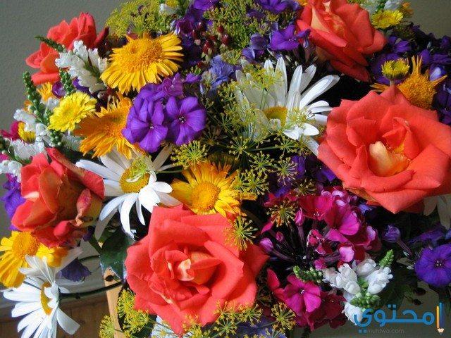 صورة متع عينك بالزهور الملونة باقات زهور 4538 5